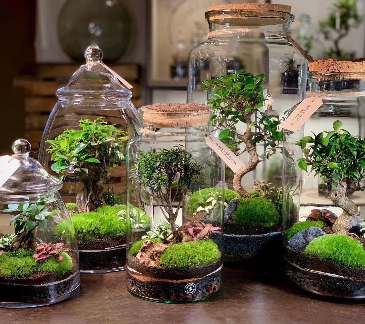 Splendidi Nano Garden