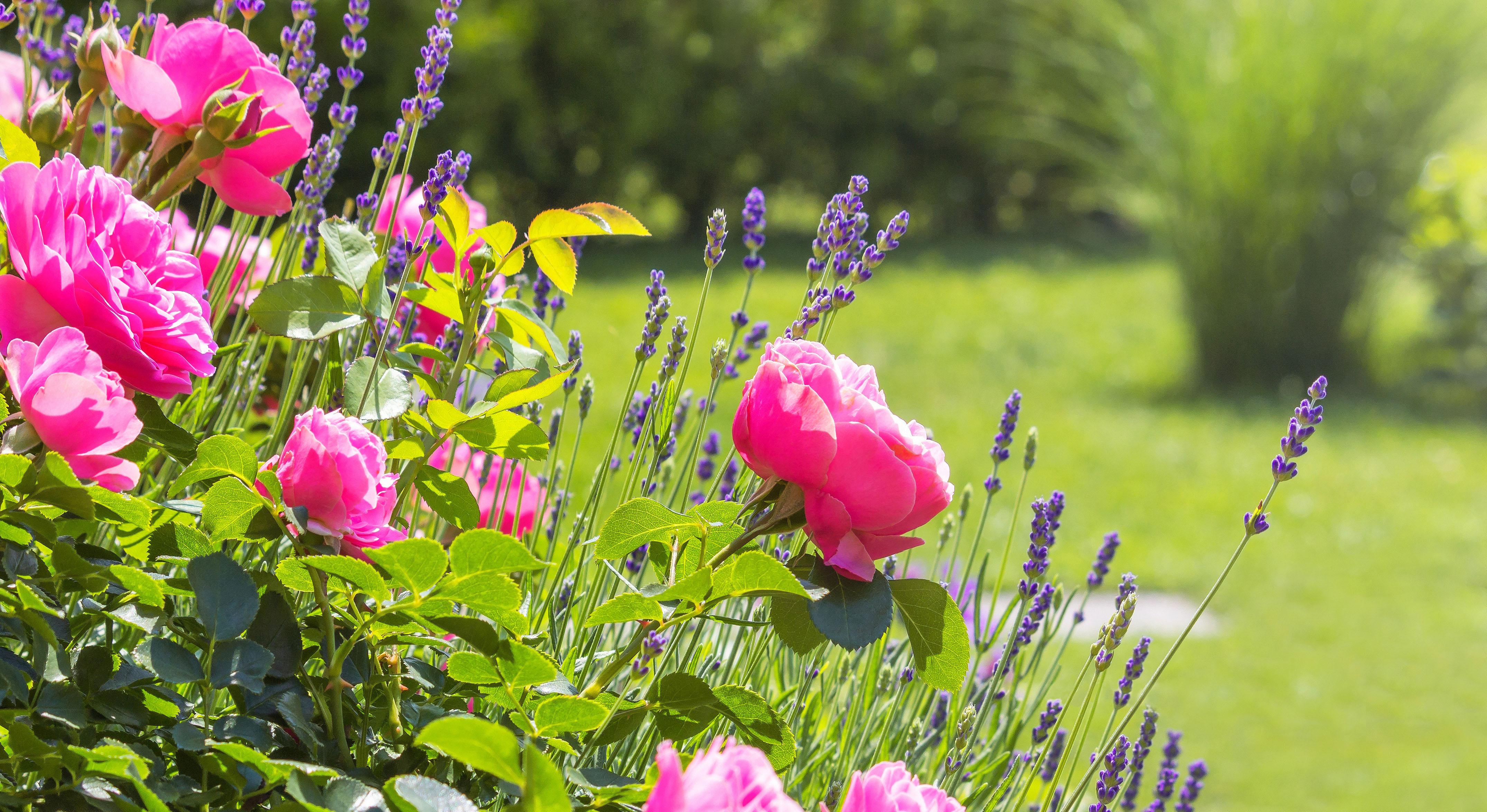 Piante da fiore