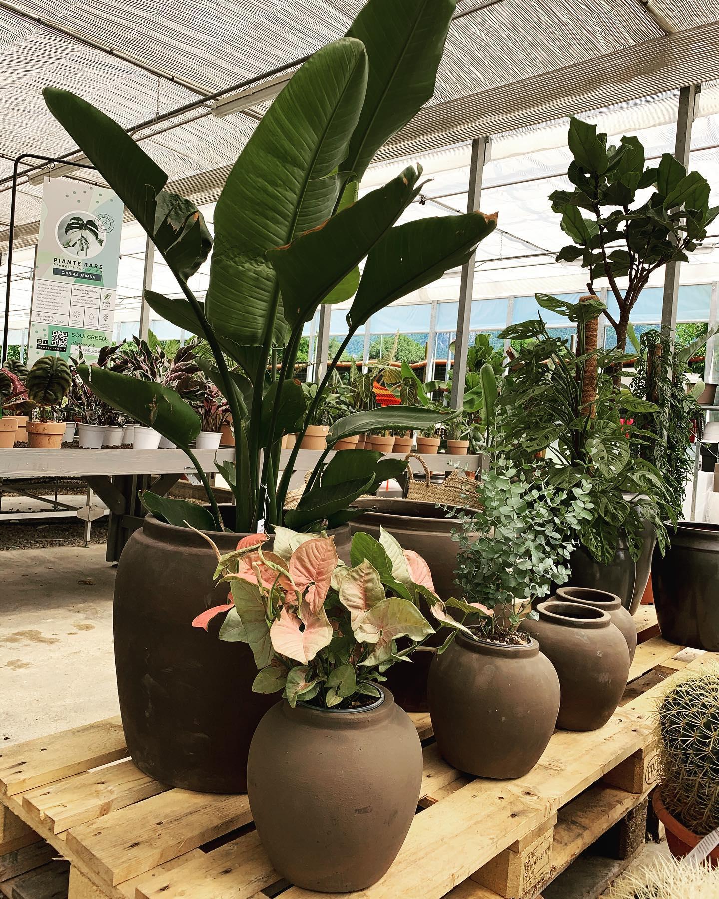 Vasi e piante all'interno dei Vivai Brugna
