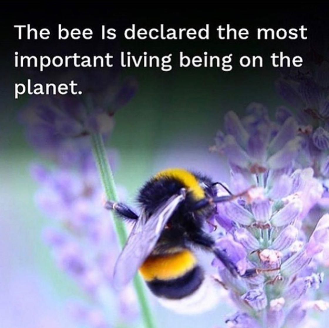 Per la salvaguardia delle api ognuno di noi deve fare la sua parte. State sempre attenti a che insetticidi comprate, NO piretroidi e NO prodotti di sintesi. Assolutamente si estratti e macerati.