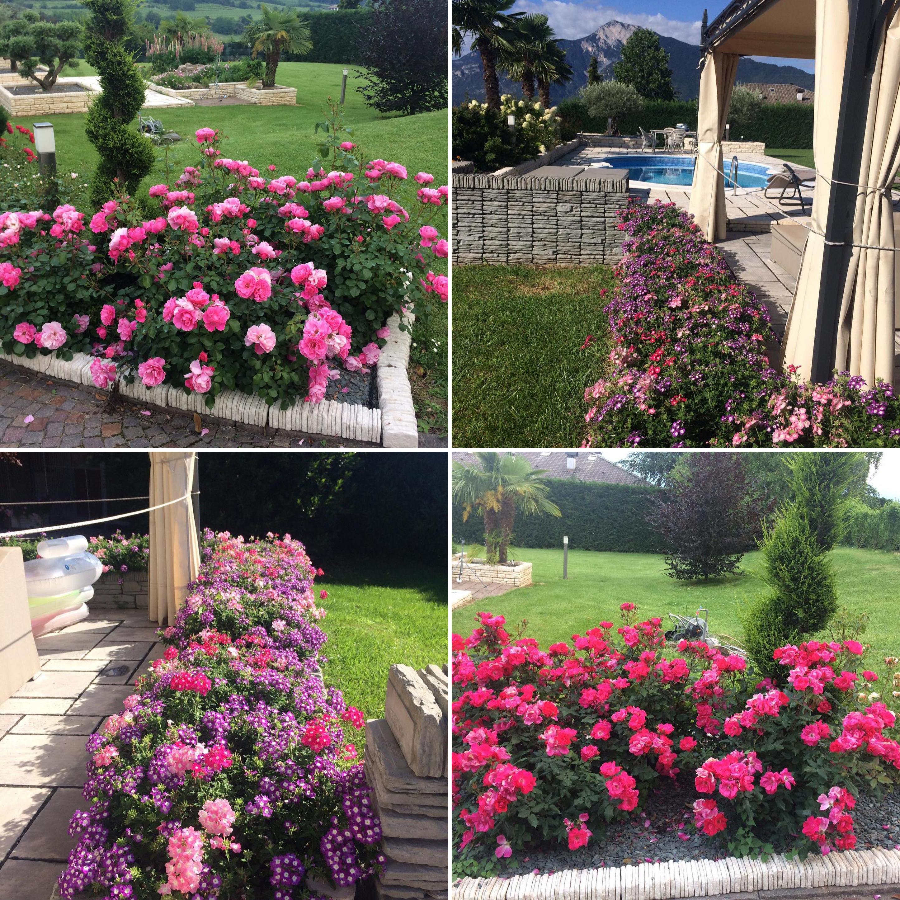Un giardino che abbiamo realizzato alcuni anni fa ma che continua a vivere rigoglioso. Queste sono grandissime soddisfazioni!!!