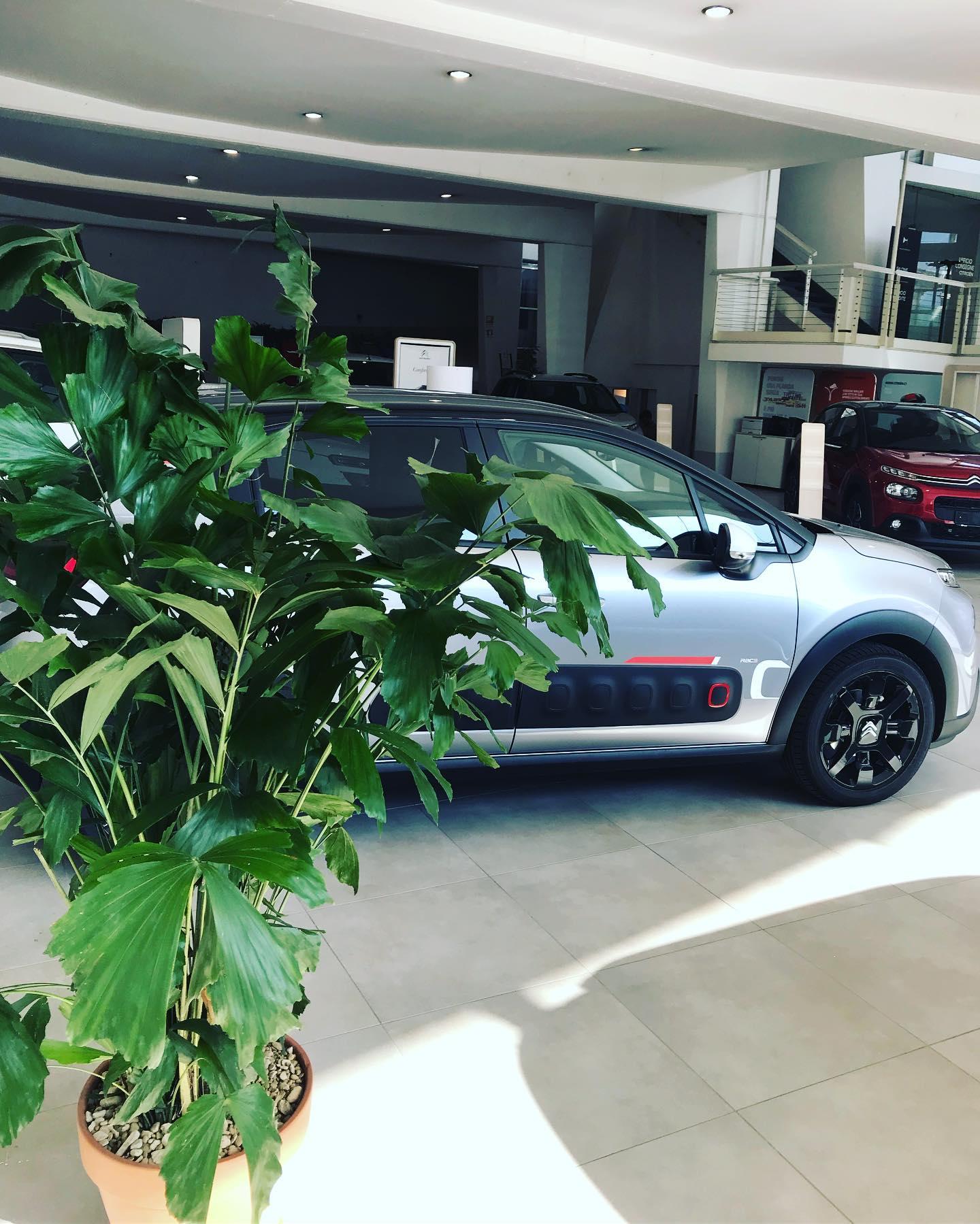Allestimento per l'inaugurazione di un salone auto