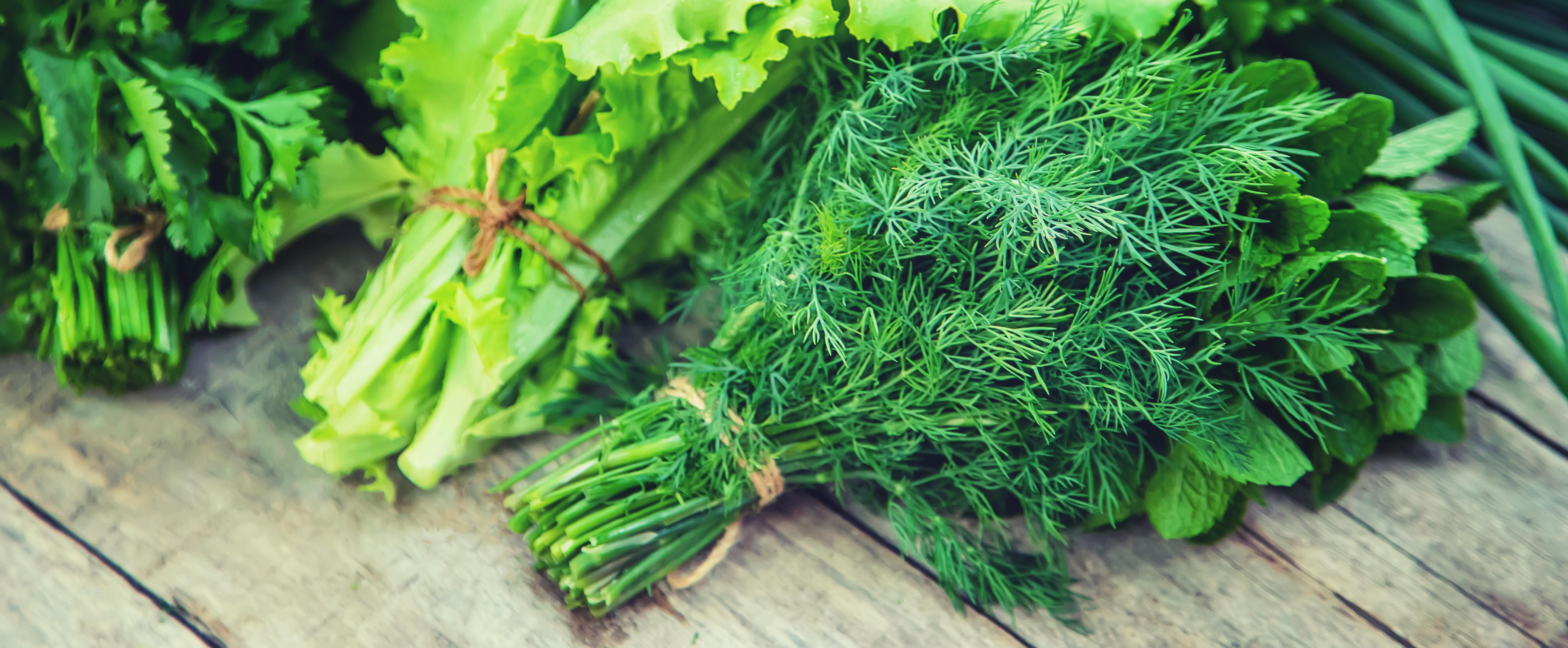 Erbe aromatiche e insalata