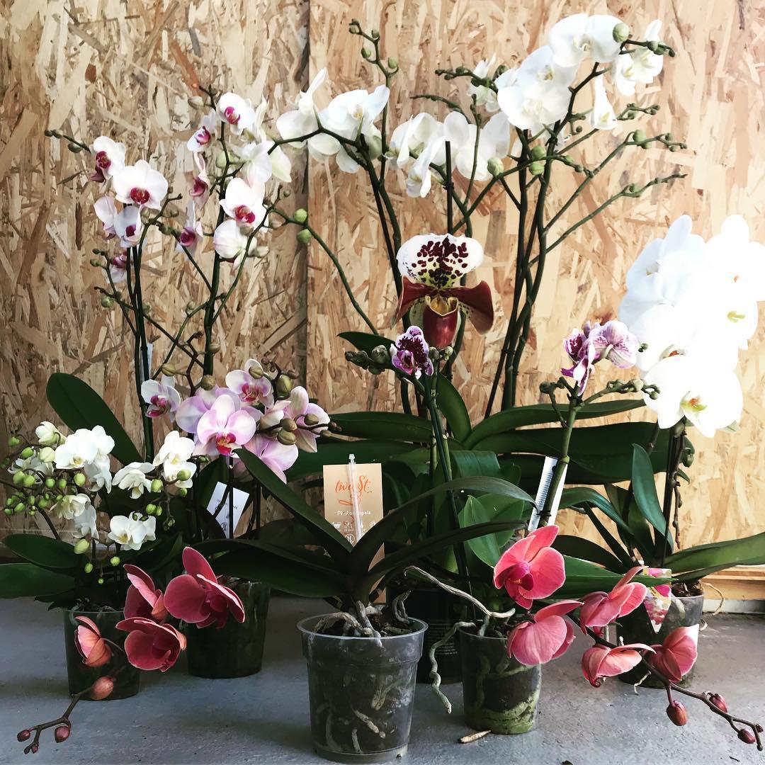 Orchidee... stupende!