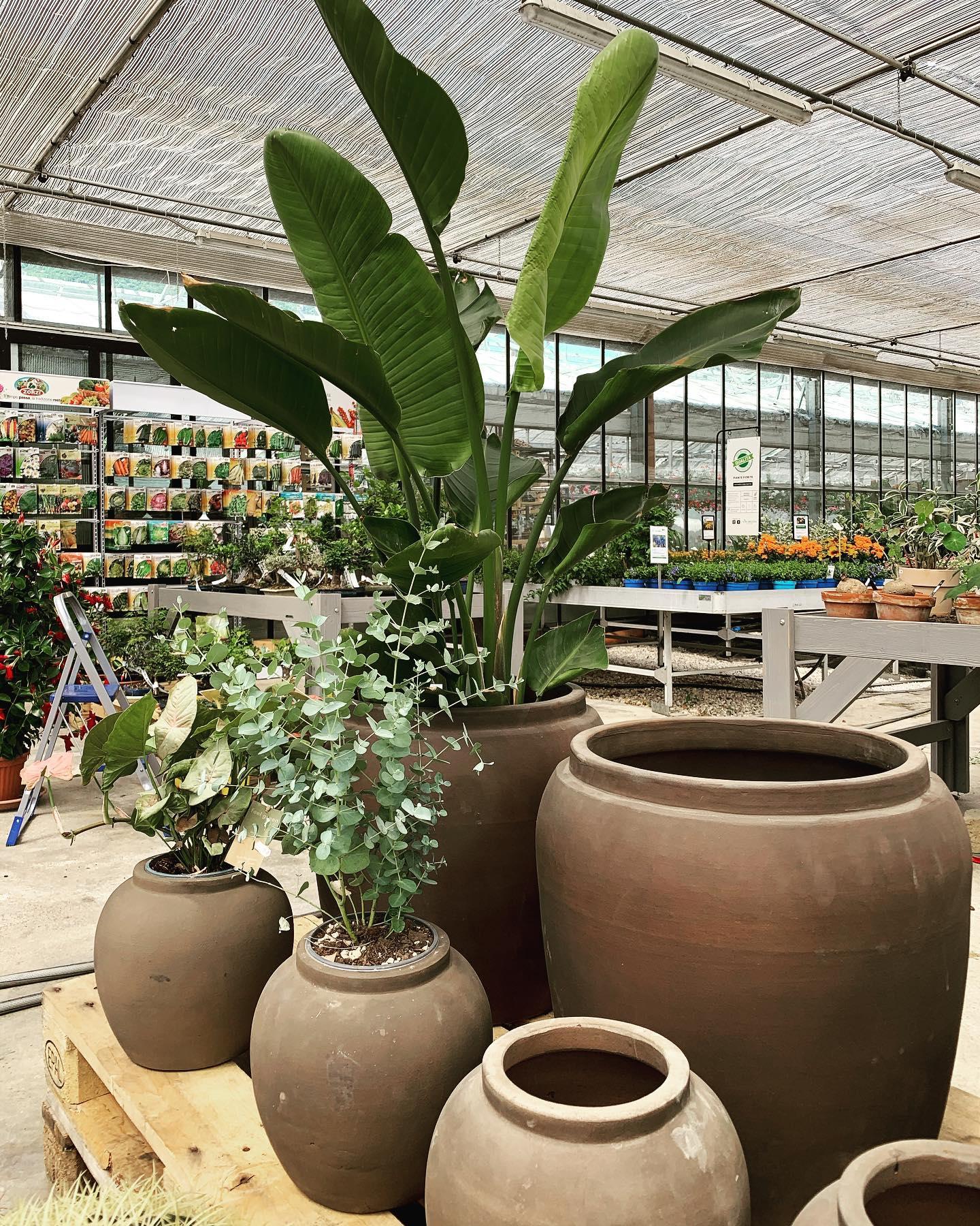 Vasi e piante acquistabili presso i Vivai Brugna