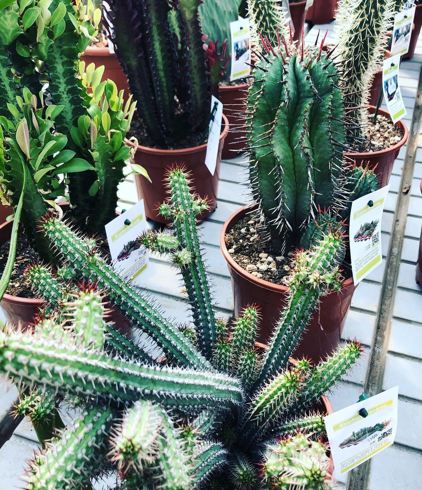 W le piante grasse!